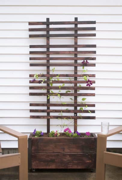 trellis ideas