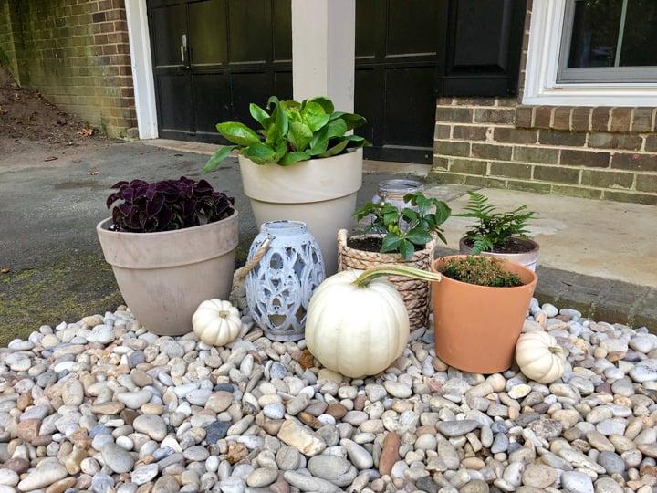 planters in gravel garden