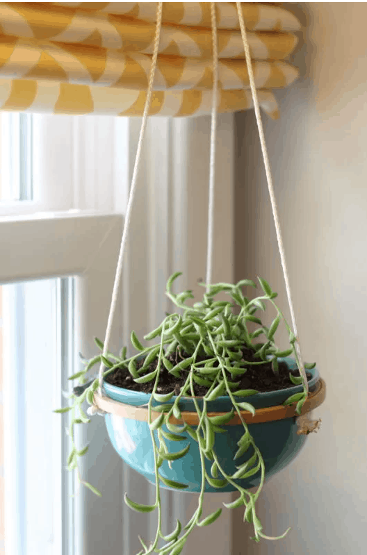 Make a Hanging Planter Out of An Embroidery Hoop