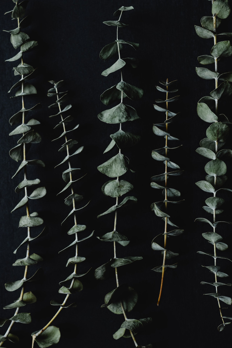 drying eucalyptus